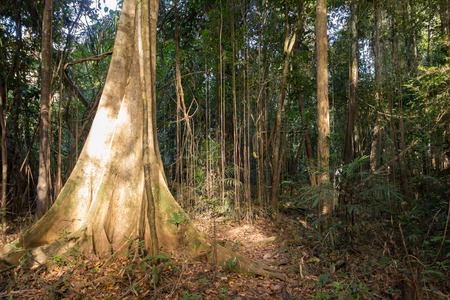 아마존 정글에 조밀 한 식물을 관통 햇빛 스톡 콘텐츠