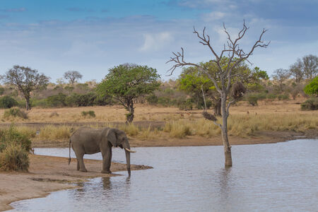 여름날 코끼리 마시는 물 스톡 콘텐츠