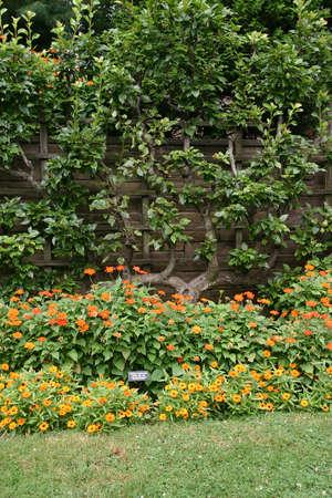 botanic: Flowers in a garden (Brooklyn Botanic Garden) Stock Photo