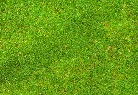 Green moss backgruond close up photo