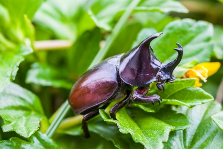 stag beetle on leaf background photo