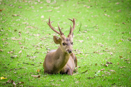 Young deer on green background photo