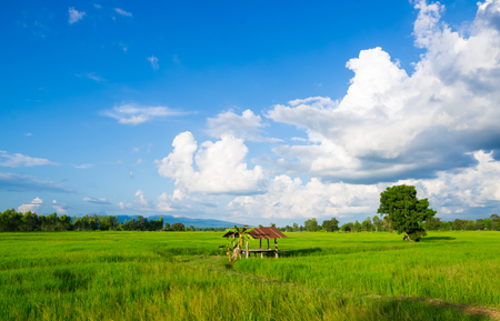 Thai traditional hut at green rice field photo