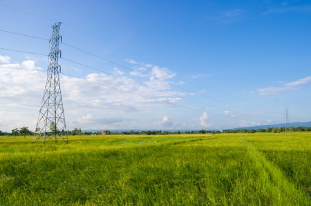 high voltage post.High-voltage tower on green rice field with sky background. photo