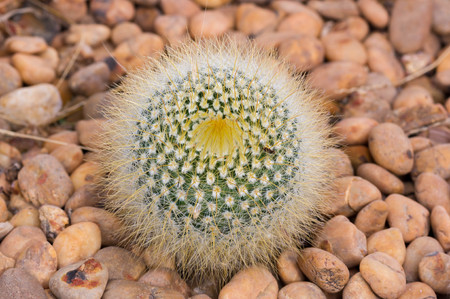 thorn tip: Close up view of several cactus.