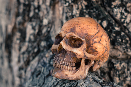 Selective focus skull on wood background. Stock Photo