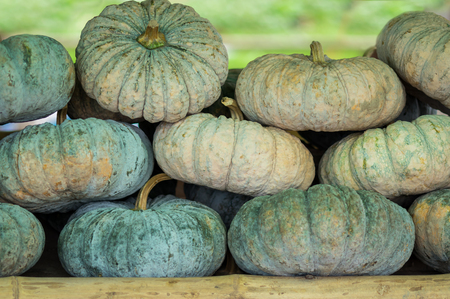 Variety of pumpkins - full background.