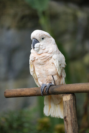 white parrot and green background in zoo  photo