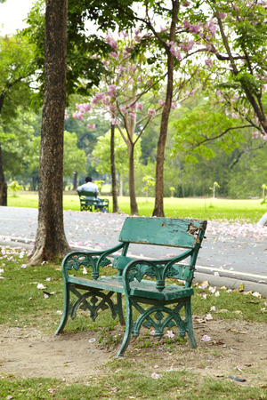 wooden green chair in park photo