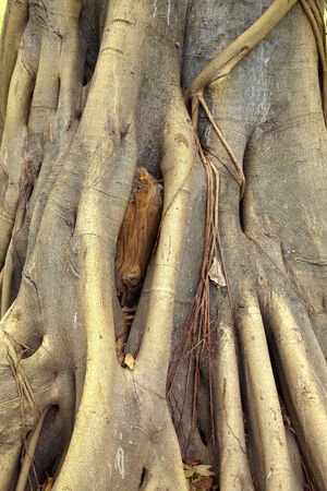 close up big root from old tree in sun light photo