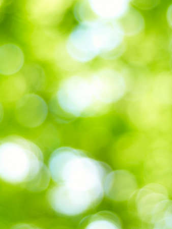 abstract wallpaper: blur green background from tree in sun light