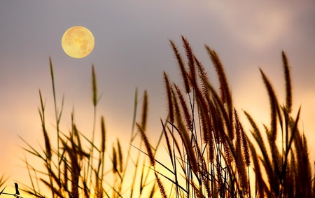 over the moon: Picture of grass and moon on the sky silhouette. Stock Photo