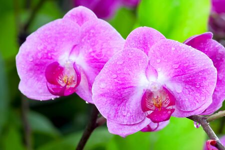 purple orchid: Picture of fresh purple orchid and leaf