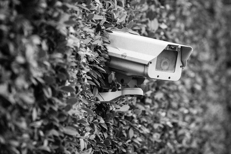 CCTV security Camera on the tree wall in the gardent.