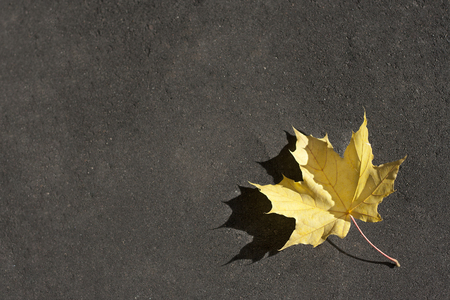 Lonely yellow leaf on the ground