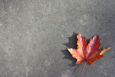 Lonely red leaf on the ground Stock Photo