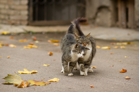 street love: Walking couple of two loving cats near falling foliage