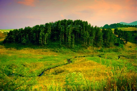 bulgaria: A forest of pine trees in Rodopi mountain, the central Balkans