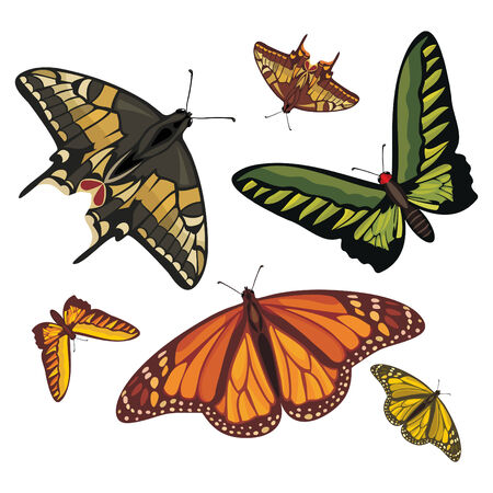 different realistic butterflies isolated on white Stock Vector - 6773929