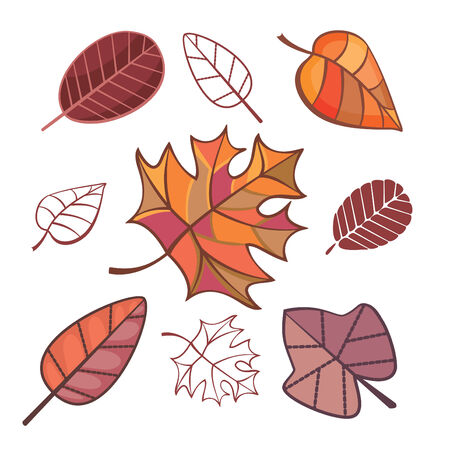 set of autumn leaves isolated on white Vector