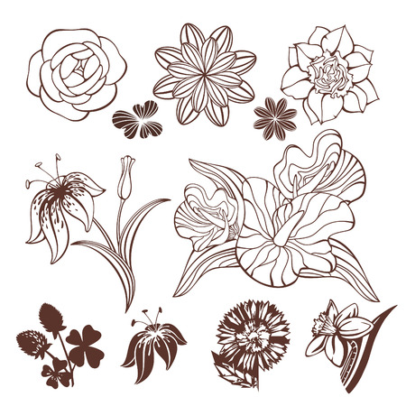 lily flowers collection: set of different cute flowers vector illustration