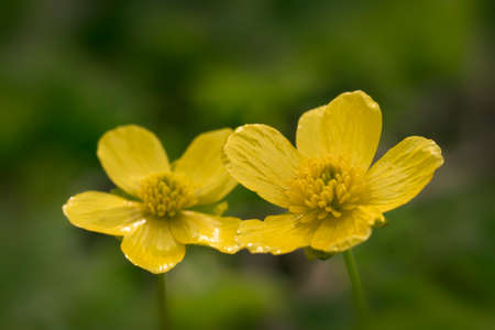 petites fleurs: Jaune petites fleurs, macro