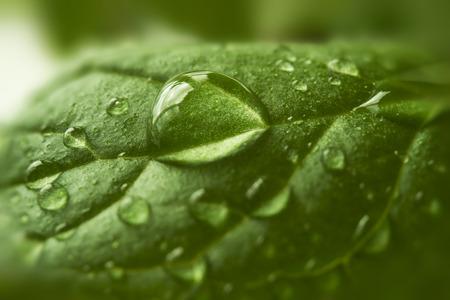 Druppels water op groen blad, macro