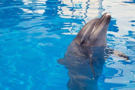 Smiling dolphin Foto de archivo