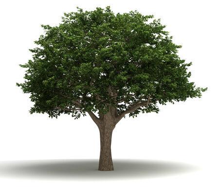 arboles frondosos: Brasileña Pepper Tree Foto de archivo