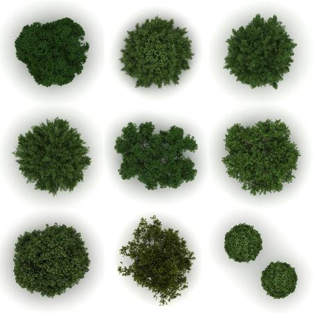 arboles frondosos: Diferentes árboles de la vista superior Foto de archivo