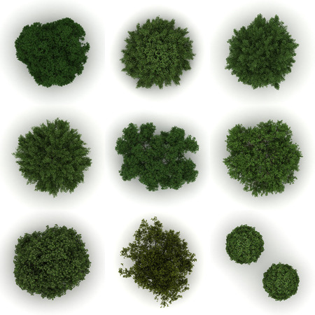 Different trees from top view Stock Photo