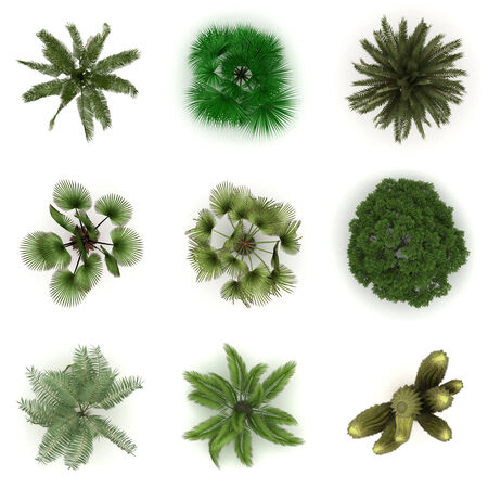 plante design: Diff�rents arbres de vue de dessus