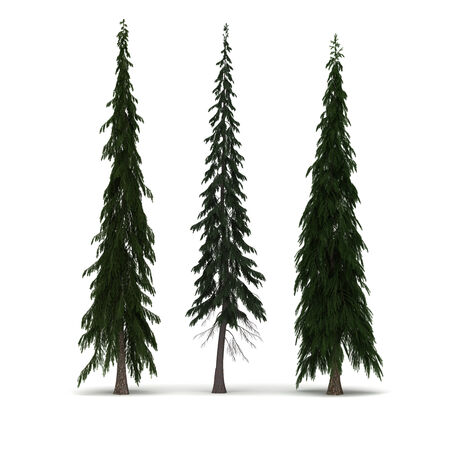 pine three: Three Pine Tree