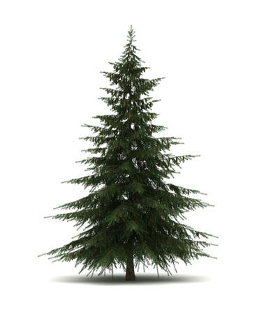 tree  pine: Un solo �rbol de pino Foto de archivo