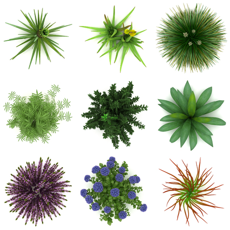 Some Plants for Landscaping (isolated white background)