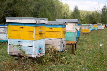Colored bee multi-body hives in the summer apiary Zdjęcie Seryjne
