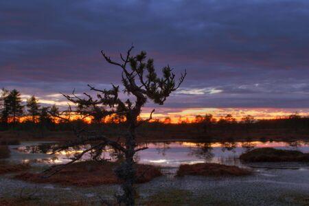 Autumn beautiful sunset on a bog in Estonia