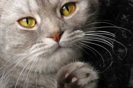 Close up of a cat with wide yellow eyes