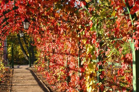 Beautiful autumn lianes arch with lanterns