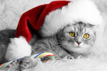 pet food: Christmas cat in red cap Stock Photo