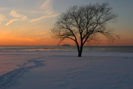 Winter sunset with silhouette of leaf-less tree Stock Photo