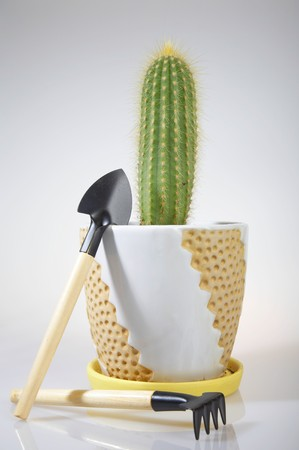 Potted Cactus and Hand Gardening Tools: rake and shovel