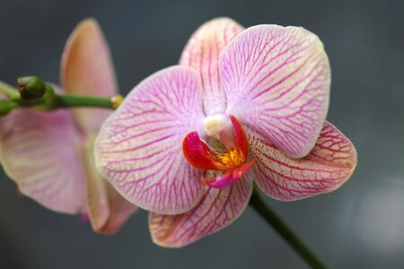 Pink orchid on natural background