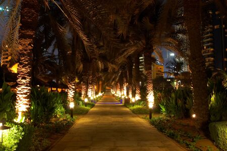 twiddle: Night walk along the street among palm trees Stock Photo