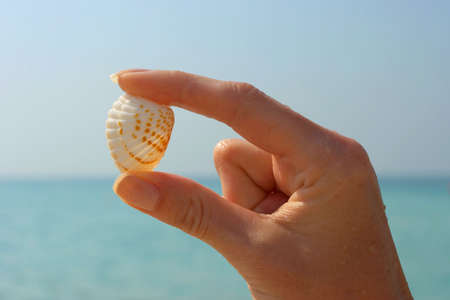 Hand and seashell on the beach