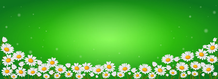 Many chamomile flowers on a green Stockfoto - 121173667