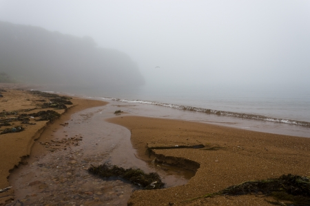 The foggy seashore with the rock and trees
