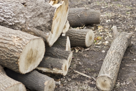 kindling: Firewood lies a pile on the earth