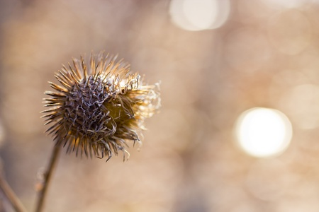 The dried-up thistle in the morning spring wood Stock Photo
