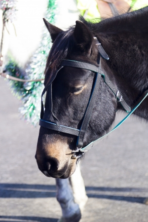 The horse in the bright sunny day photo